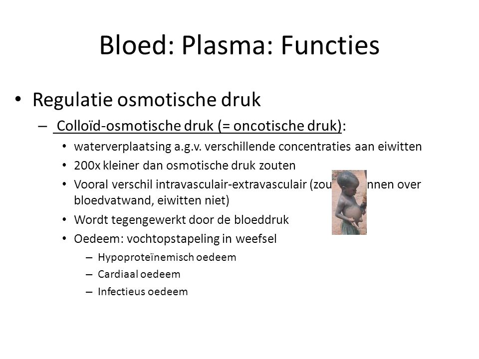 Bloed: Plasma: Functies • Regulatie osmotische druk – Colloïd-osmotische druk (= oncotische druk): • waterverplaatsing a.g.v. verschillende concentrat