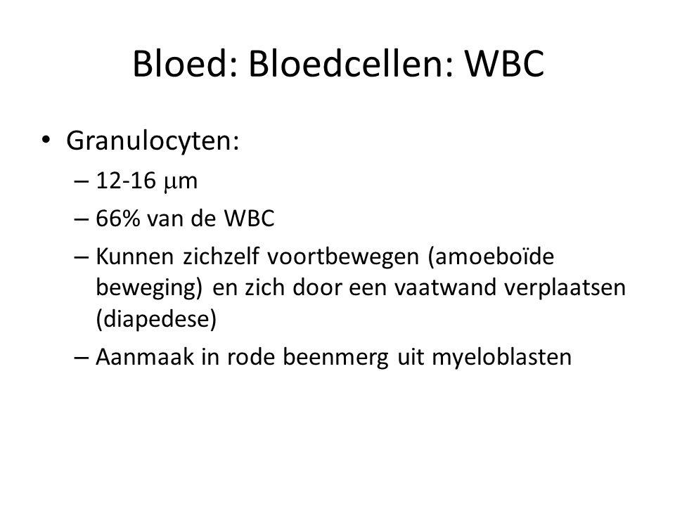Bloed: Bloedcellen: WBC • Granulocyten: – 12-16  m – 66% van de WBC – Kunnen zichzelf voortbewegen (amoeboïde beweging) en zich door een vaatwand ver