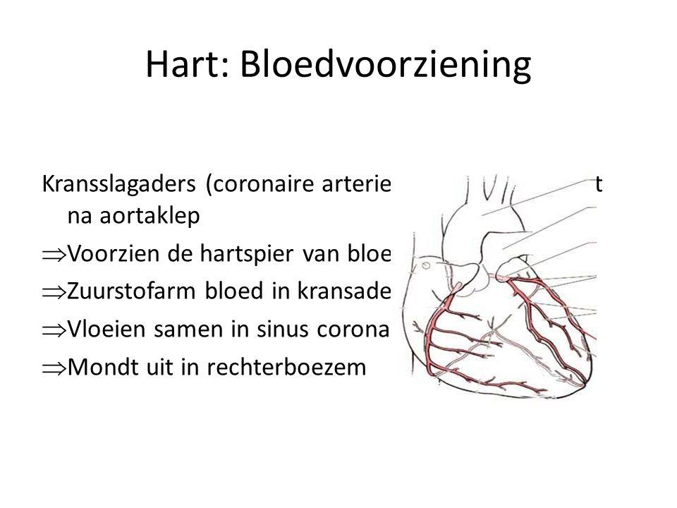 Hart: Bloedvoorziening Kransslagaders (coronaire arterieën) ontspringen net na aortaklep  Voorzien de hartspier van bloed  Zuurstofarm bloed in kransaders  Vloeien samen in sinus coronarius  Mondt uit in rechterboezem