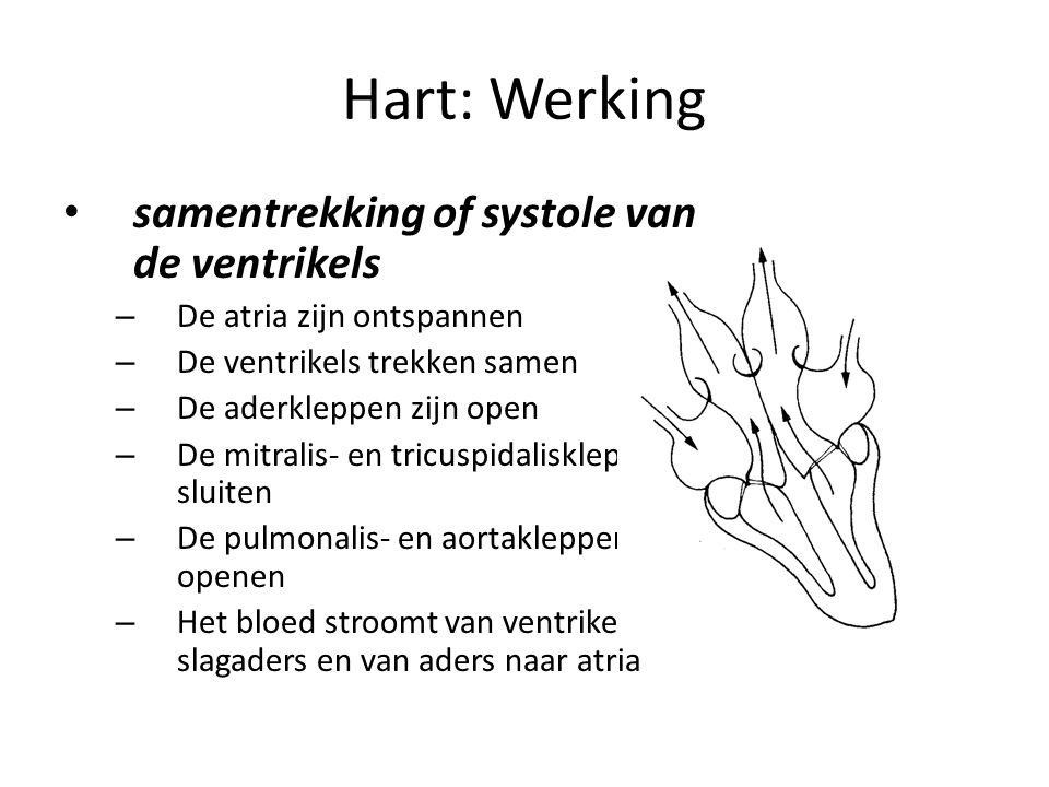 Hart: Werking • samentrekking of systole van de ventrikels – De atria zijn ontspannen – De ventrikels trekken samen – De aderkleppen zijn open – De mitralis- en tricuspidaliskleppen sluiten – De pulmonalis- en aortakleppen openen – Het bloed stroomt van ventrikels naar slagaders en van aders naar atria