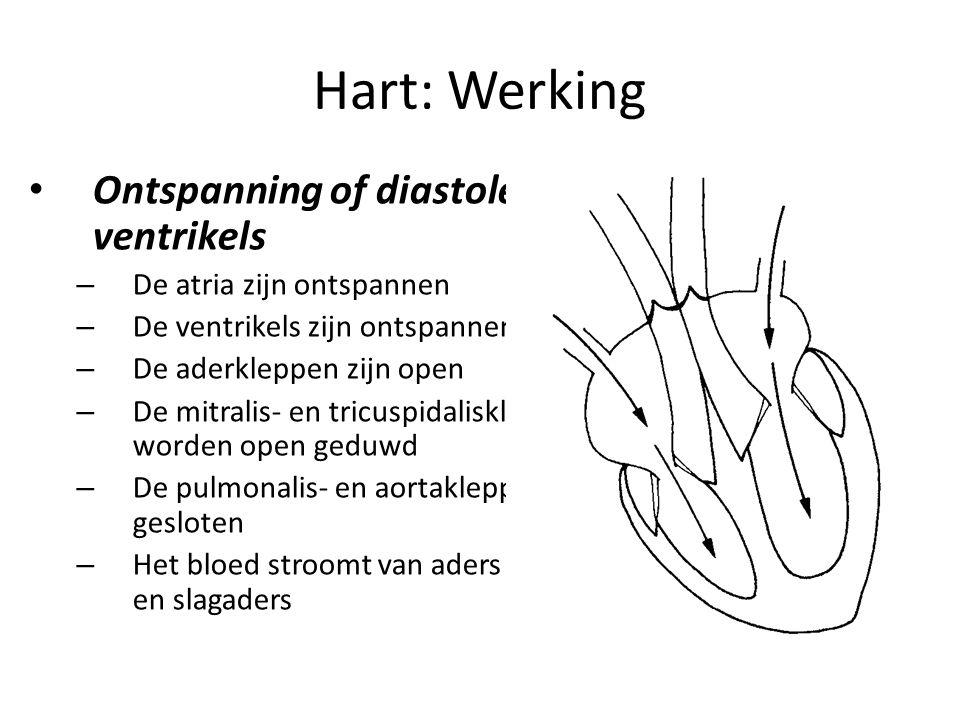 Hart: Werking • Ontspanning of diastole van de ventrikels – De atria zijn ontspannen – De ventrikels zijn ontspannen – De aderkleppen zijn open – De mitralis- en tricuspidaliskleppen worden open geduwd – De pulmonalis- en aortakleppen zijn gesloten – Het bloed stroomt van aders naar aders en slagaders