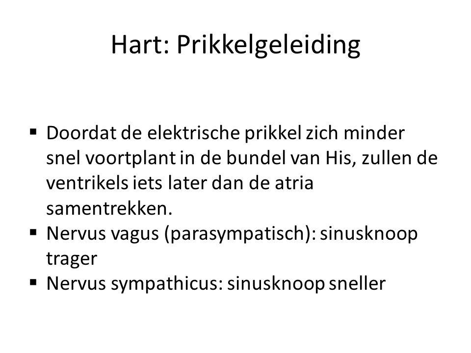 Hart: Prikkelgeleiding  Doordat de elektrische prikkel zich minder snel voortplant in de bundel van His, zullen de ventrikels iets later dan de atria