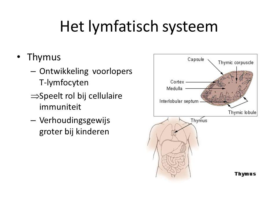 Het lymfatisch systeem • Thymus – Ontwikkeling voorlopers T-lymfocyten  Speelt rol bij cellulaire immuniteit – Verhoudingsgewijs groter bij kinderen