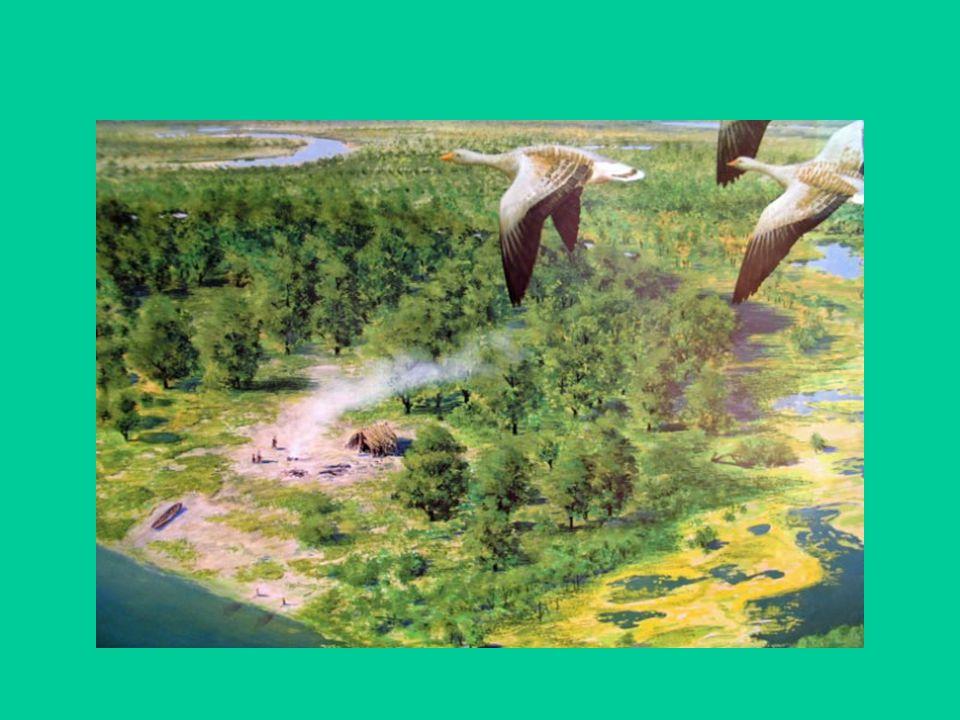 De (re)constructie van een prehistorische boerderij