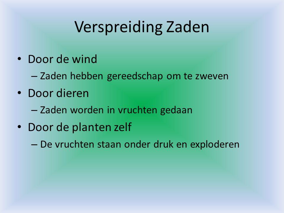 Verspreiding Zaden • Door de wind – Zaden hebben gereedschap om te zweven • Door dieren – Zaden worden in vruchten gedaan • Door de planten zelf – De