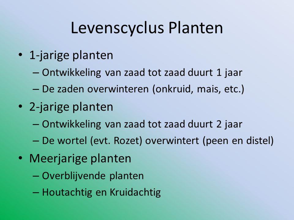 Levenscyclus Planten • 1-jarige planten – Ontwikkeling van zaad tot zaad duurt 1 jaar – De zaden overwinteren (onkruid, mais, etc.) • 2-jarige planten