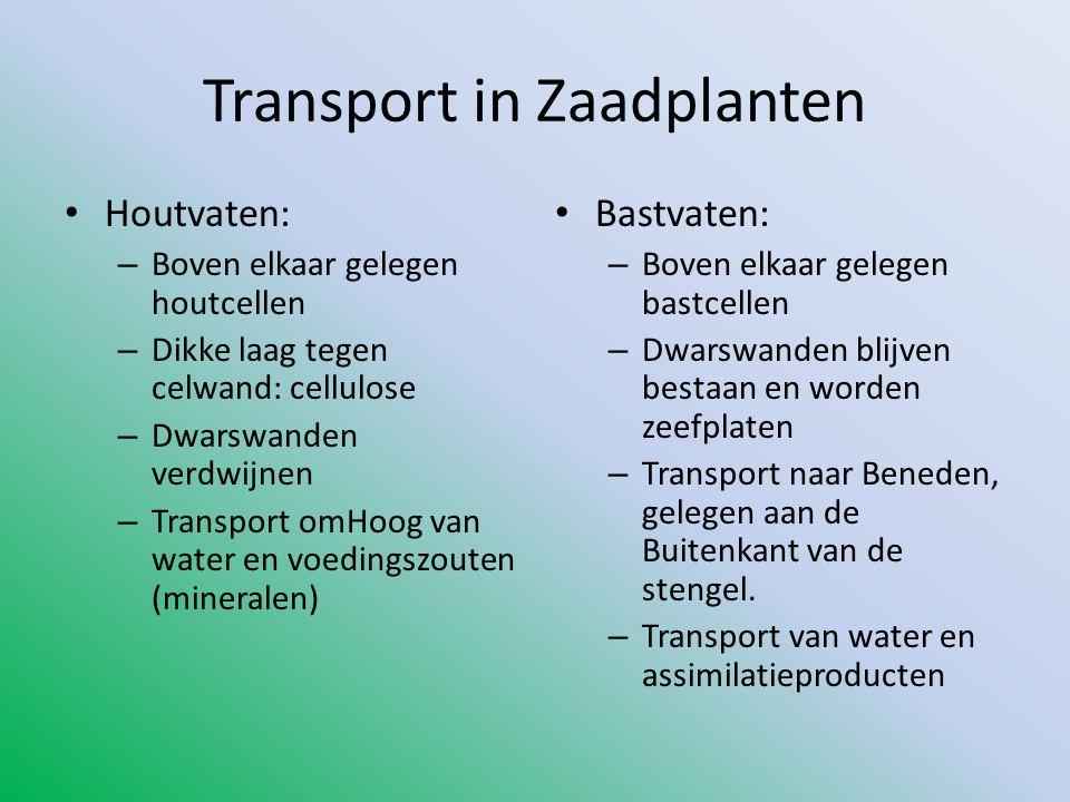 Transport in Zaadplanten • Houtvaten: – Boven elkaar gelegen houtcellen – Dikke laag tegen celwand: cellulose – Dwarswanden verdwijnen – Transport omH