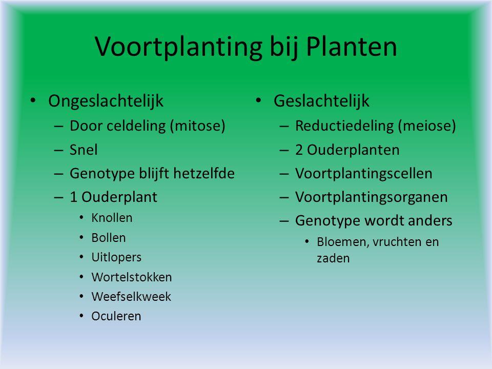 Voortplanting bij Planten • Ongeslachtelijk – Door celdeling (mitose) – Snel – Genotype blijft hetzelfde – 1 Ouderplant • Knollen • Bollen • Uitlopers