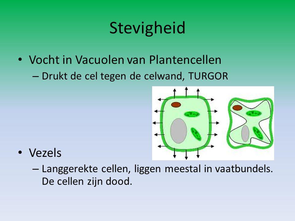 Stevigheid • Vocht in Vacuolen van Plantencellen – Drukt de cel tegen de celwand, TURGOR • Vezels – Langgerekte cellen, liggen meestal in vaatbundels.