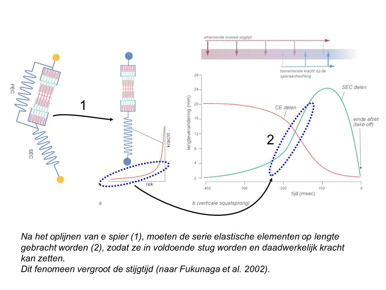 Na het oplijnen van e spier (1), moeten de serie elastische elementen op lengte gebracht worden (2), zodat ze in voldoende stug worden en daadwerkelij