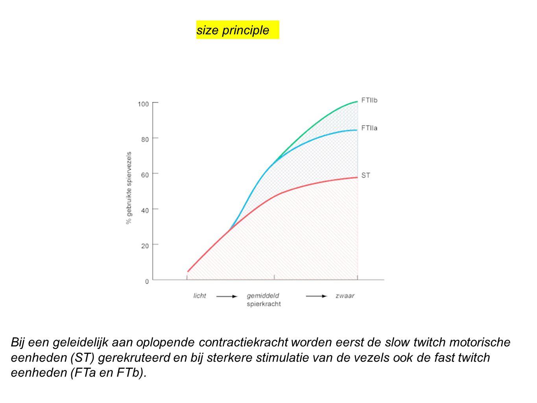 size principle Bij een geleidelijk aan oplopende contractiekracht worden eerst de slow twitch motorische eenheden (ST) gerekruteerd en bij sterkere st