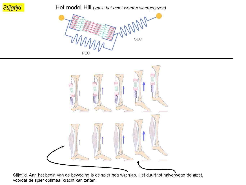 Na het oplijnen van e spier (1), moeten de serie elastische elementen op lengte gebracht worden (2), zodat ze in voldoende stug worden en daadwerkelijk kracht kan zetten.
