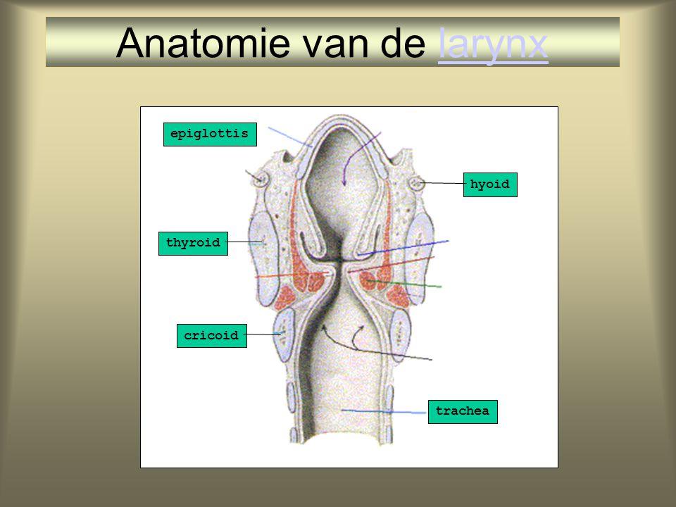 thyroid epiglottis cricoid trachea hyoid Anatomie van de larynxlarynx