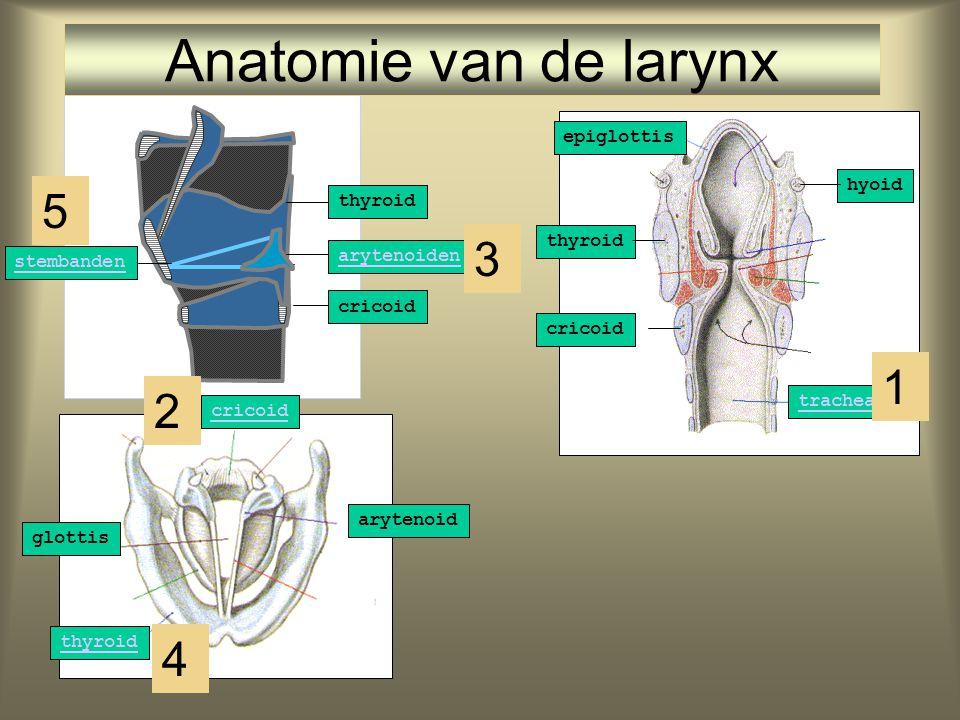 arytenoiden cricoid glottis thyroid epiglottis cricoid trachea hyoid stembanden thyroid cricoid arytenoid Anatomie van de larynx 1 2 4 3 5