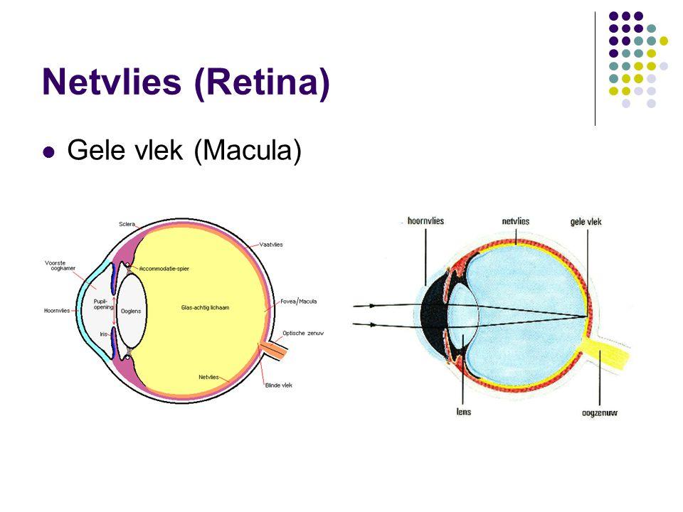 Netvlies (Retina)  Gele vlek (Macula)