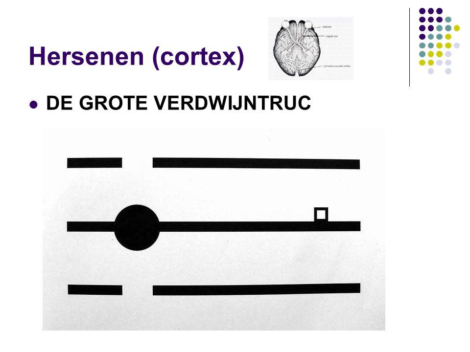 Hersenen (cortex)  DE GROTE VERDWIJNTRUC