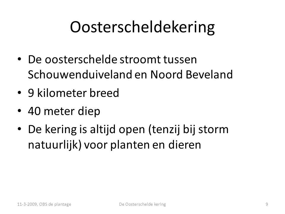 Oosterscheldekering • De oosterschelde stroomt tussen Schouwenduiveland en Noord Beveland • 9 kilometer breed • 40 meter diep • De kering is altijd open (tenzij bij storm natuurlijk) voor planten en dieren 11-3-2009, OBS de plantage9De Oosterschelde kering