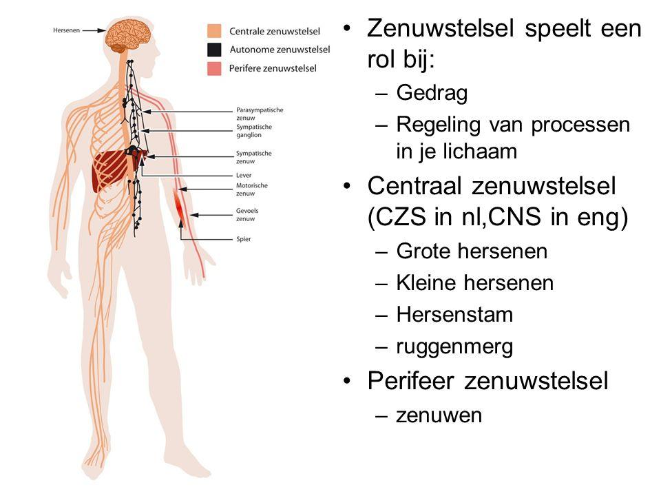 De bouw van zenuwcellen •Bouw van zenuwcellen (neuronen) –Cellichaam –Uitlopers •Dendrieten (naar cl toe  ) •Axonen (van cl af  ) –Kunnen myelineschede hebben