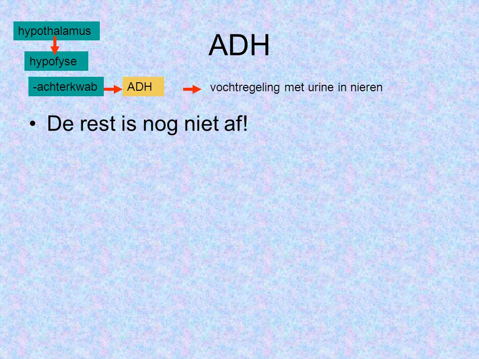 ADH •De rest is nog niet af! hypothalamus hypofyse -achterkwabADH vochtregeling met urine in nieren