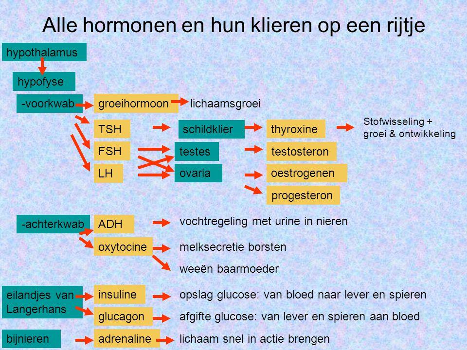 Groeihormoon hypothalamus hypofyse -voorkwab groeihormoonlichaamsgroei