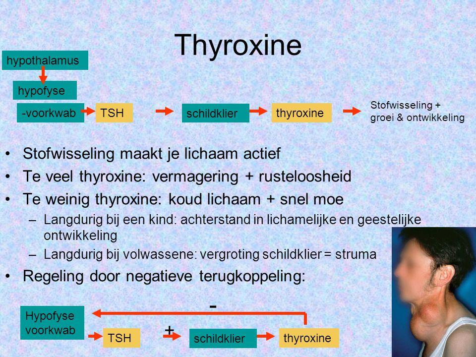 Thyroxine •Stofwisseling maakt je lichaam actief •Te veel thyroxine: vermagering + rusteloosheid •Te weinig thyroxine: koud lichaam + snel moe –Langdu