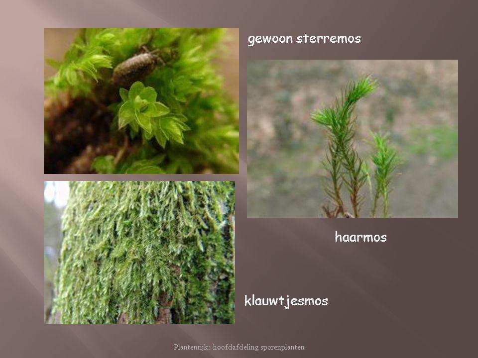 Plantenrijk: hoofdafdeling sporenplanten gewoon sterremos haarmos klauwtjesmos