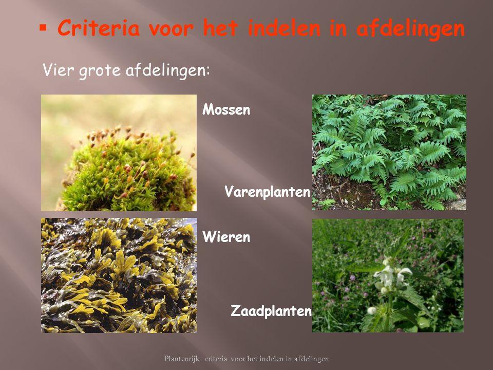 Plantenrijk: criteria voor het indelen in afdelingen  Criteria voor het indelen in afdelingen Vier grote afdelingen: Mossen Varenplanten Wieren Zaadp
