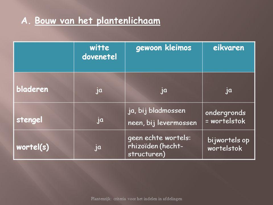 Plantenrijk: criteria voor het indelen in afdelingen A.Bouw van het plantenlichaam witte dovenetel gewoon kleimoseikvaren bladeren stengel wortel(s) j