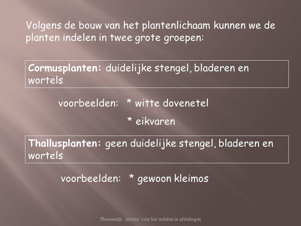 Plantenrijk: criteria voor het indelen in afdelingen Volgens de bouw van het plantenlichaam kunnen we de planten indelen in twee grote groepen: Cormus
