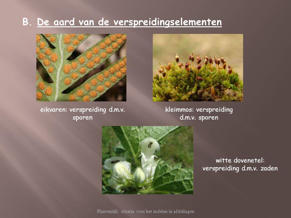 Plantenrijk: criteria voor het indelen in afdelingen B.De aard van de verspreidingselementen eikvaren: verspreiding d.m.v. sporen kleimmos: verspreidi