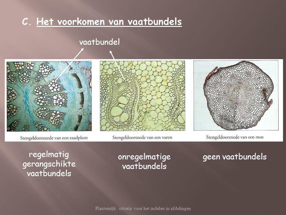 Plantenrijk: criteria voor het indelen in afdelingen C.Het voorkomen van vaatbundels vaatbundel regelmatig gerangschikte vaatbundels onregelmatige vaa