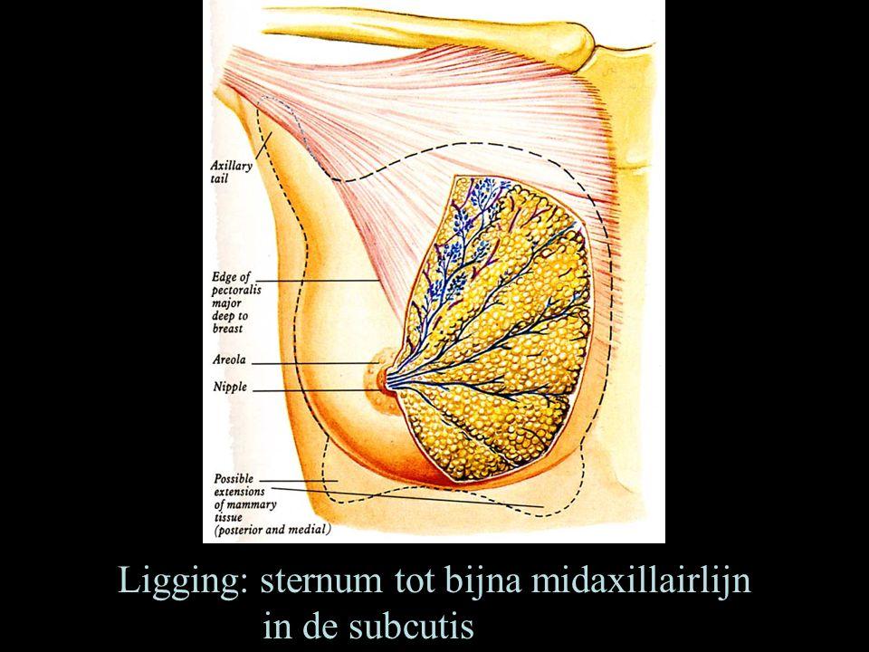 Ligging: sternum tot bijna midaxillairlijn in de subcutis