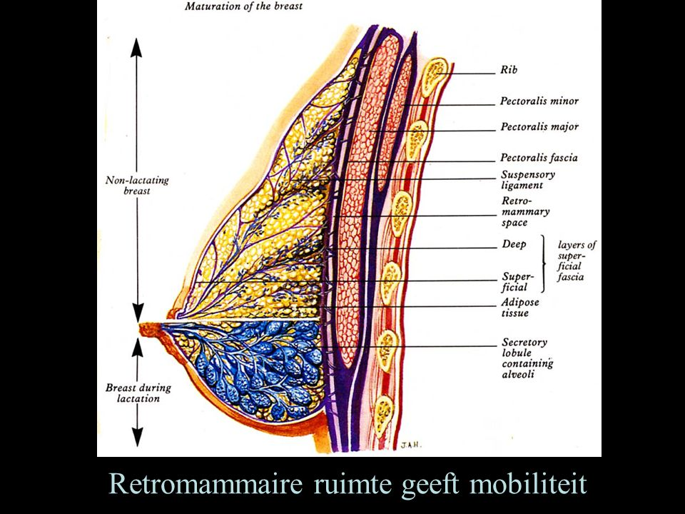 Retromammaire ruimte geeft mobiliteit