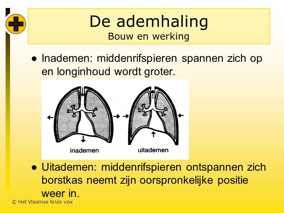 De ademhaling Bouw en werking ●Inademen: middenrifspieren spannen zich op en longinhoud wordt groter.