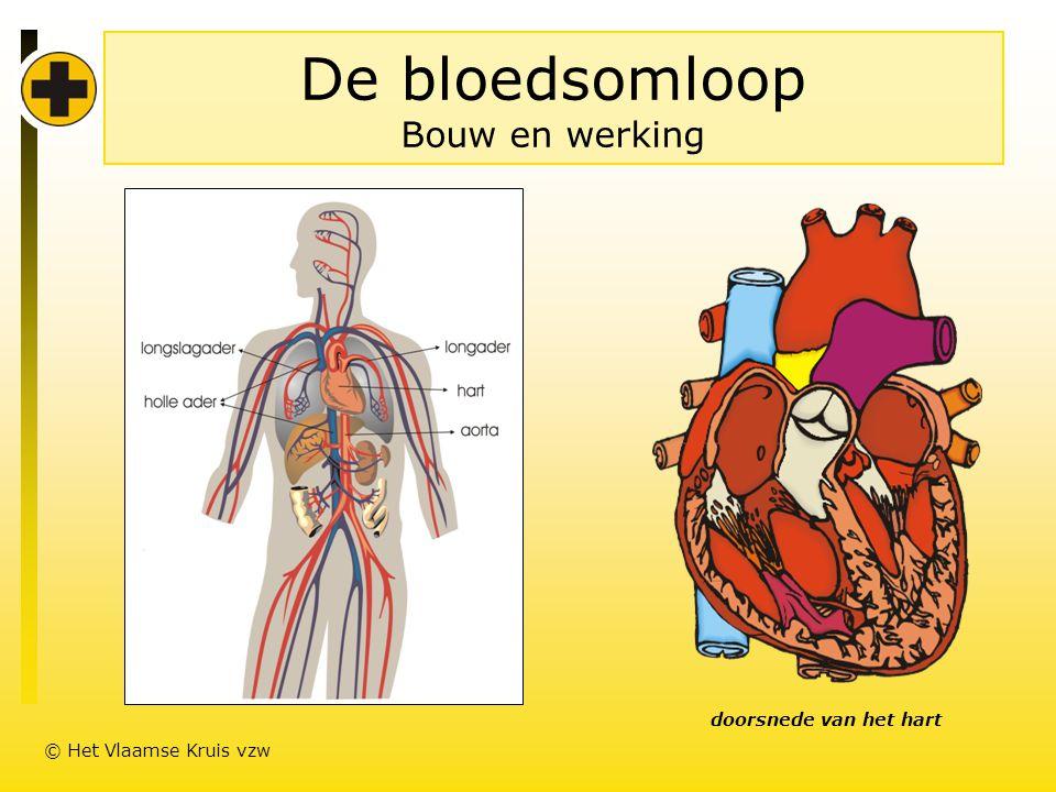 De bloedsomloop Bouw en werking doorsnede van het hart © Het Vlaamse Kruis vzw