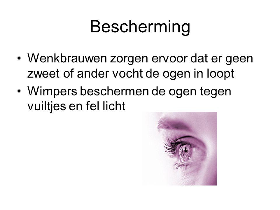 Bescherming •Wenkbrauwen zorgen ervoor dat er geen zweet of ander vocht de ogen in loopt •Wimpers beschermen de ogen tegen vuiltjes en fel licht