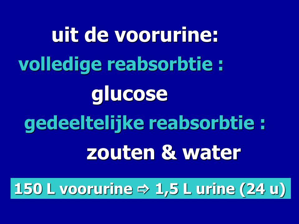 uit de voorurine: volledige reabsorbtie : gedeeltelijke reabsorbtie : glucose zouten & water 150 L voorurine  1,5 L urine (24 u)