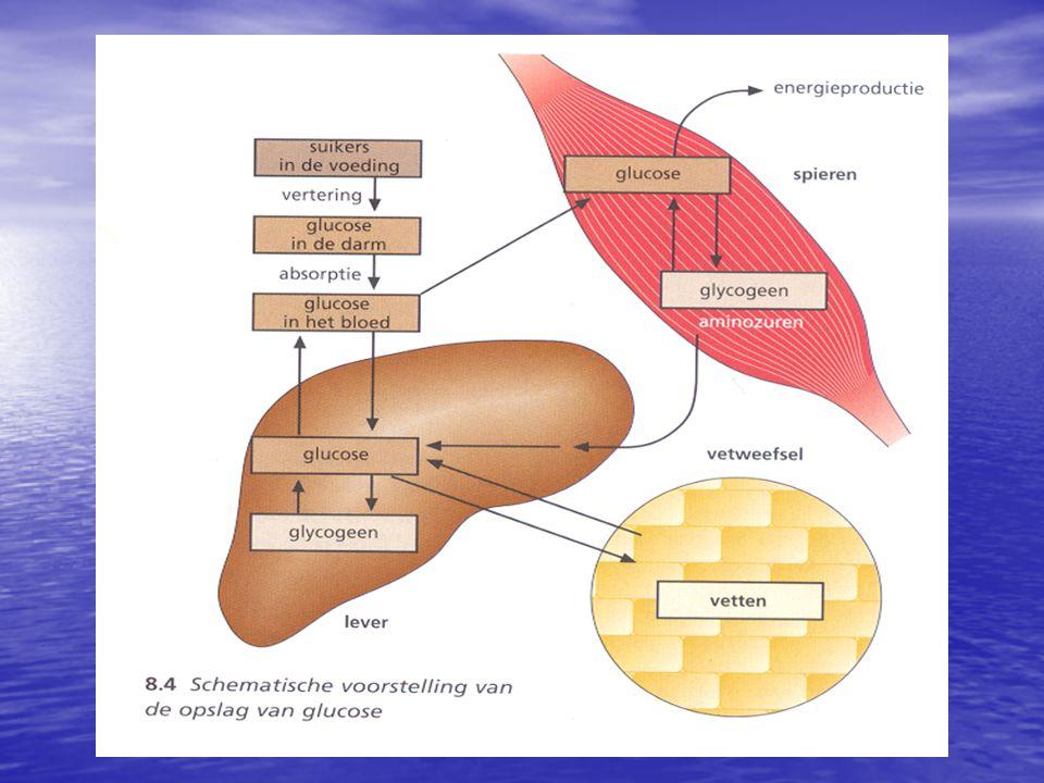 Hormonale regulatie van het bloedglucosegehalte i n s u l i n e g l u c a g o n