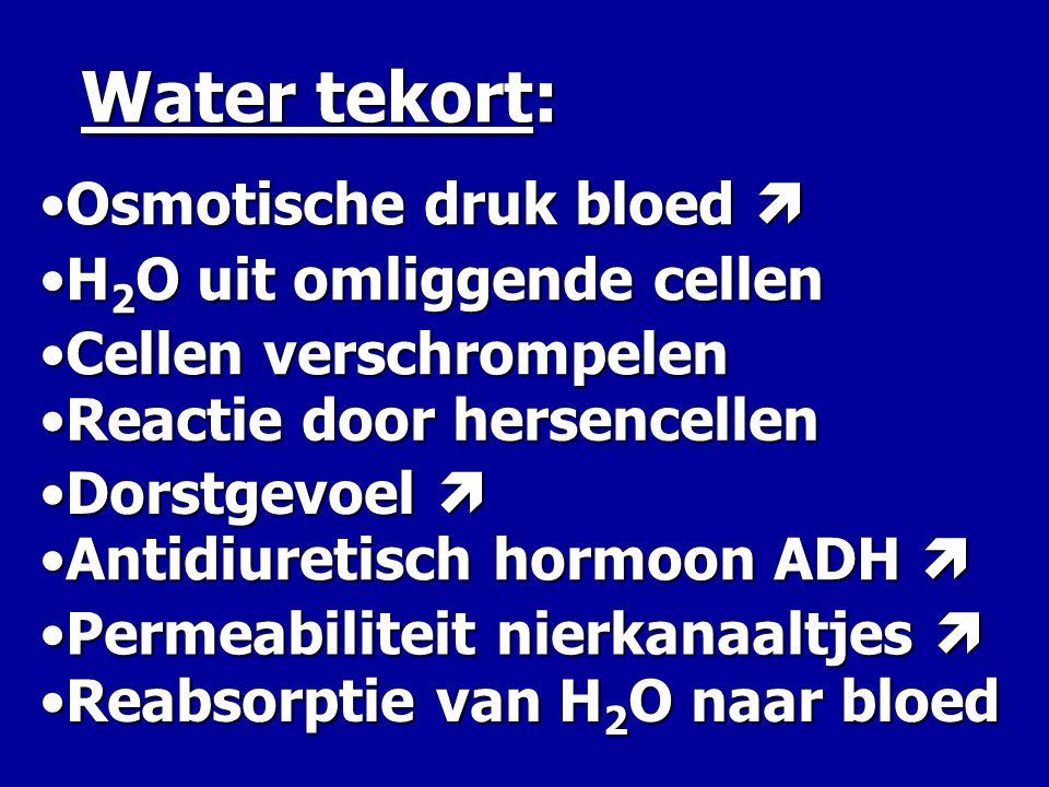 Water tekort: •O•O•O•Osmotische druk bloed  •H•H•H•H2O uit omliggende cellen •C•C•C•Cellen verschrompelen •R•R•R•Reactie door hersencellen •D•D•D•Dor