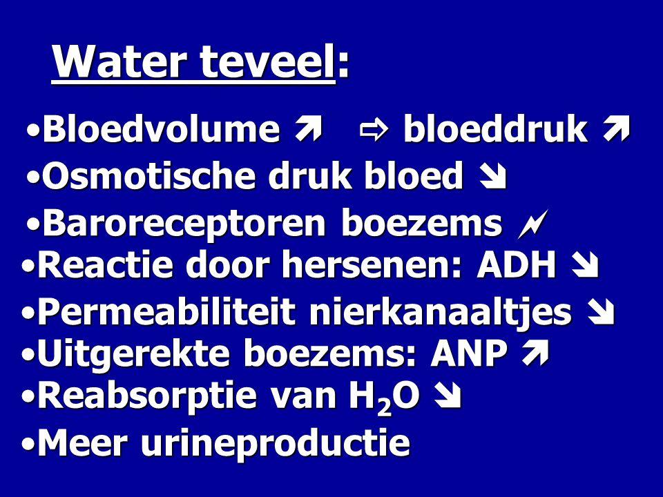 Water teveel: •B•B•B•Bloedvolume   bloeddruk  •O•O•O•Osmotische druk bloed  •B•B•B•Baroreceptoren boezems  •R•R•R•Reactie door hersenen: ADH  •U