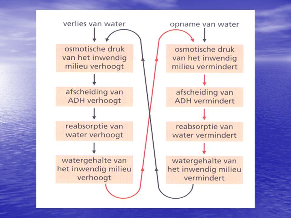 B.2 De waterbalans ontregeld Nieraandoeningen Niergruis, nierstenen nierdialyse Bloed zuiveren van afvalstoffen 'hemodialyse'