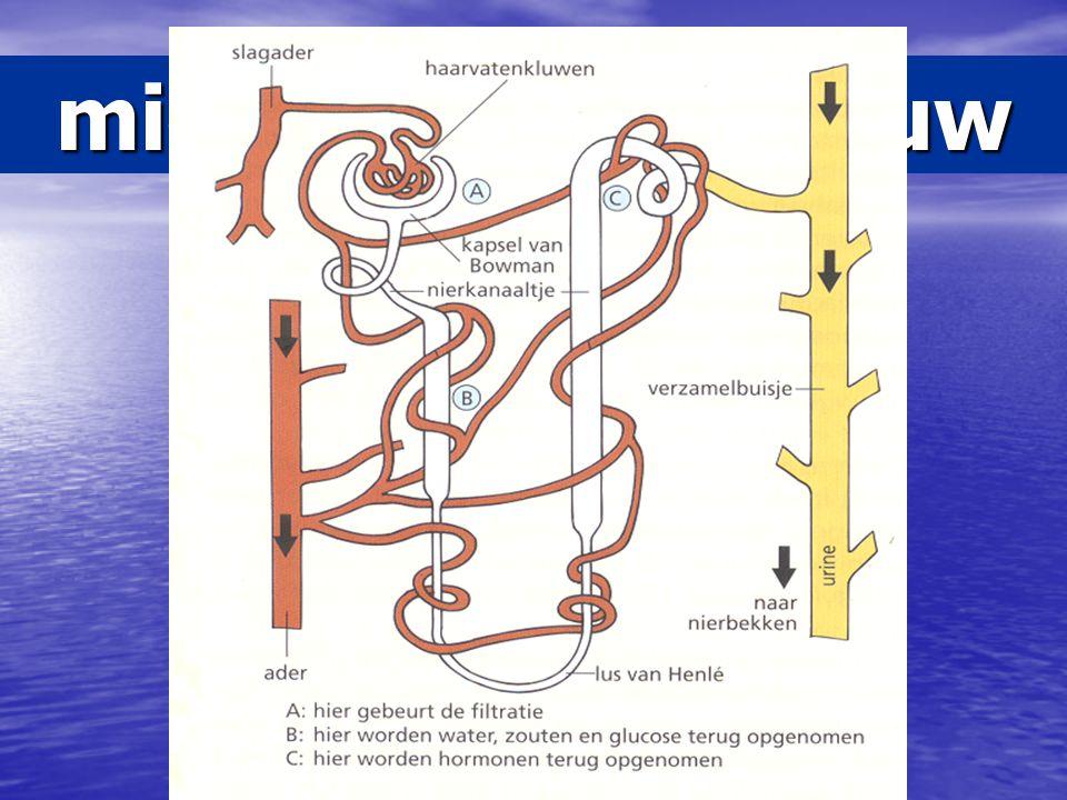 microscopische bouw