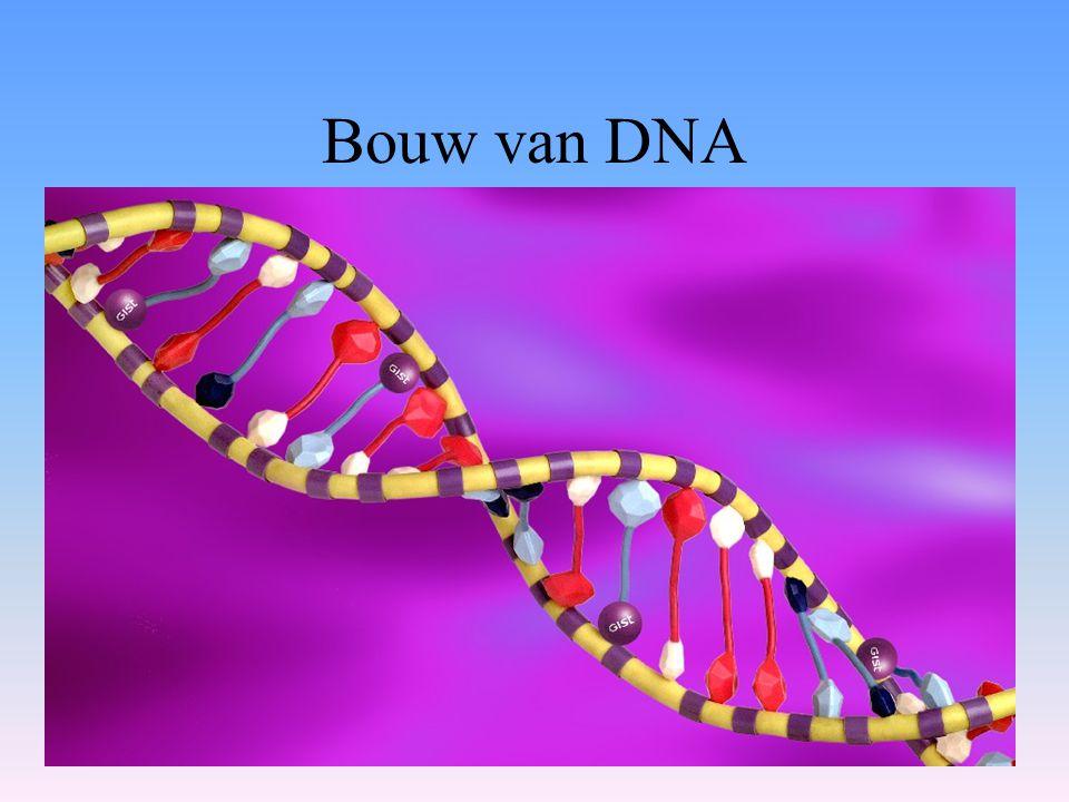 Bouw van DNA