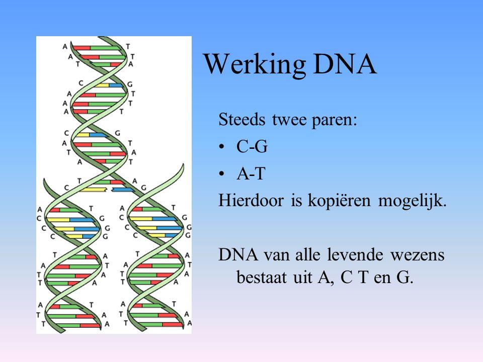 Werking DNA Steeds twee paren: •C-G •A-T Hierdoor is kopiëren mogelijk. DNA van alle levende wezens bestaat uit A, C T en G.