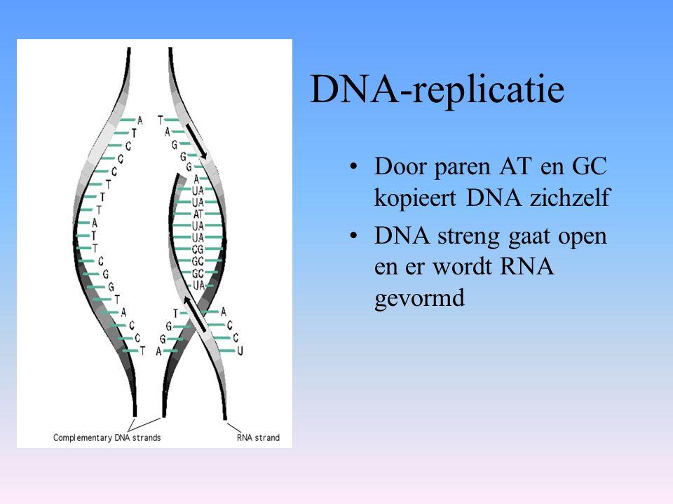 DNA-replicatie •Door paren AT en GC kopieert DNA zichzelf •DNA streng gaat open en er wordt RNA gevormd