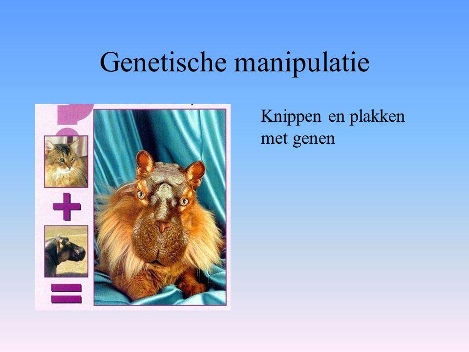 Genetische manipulatie Knippen en plakken met genen