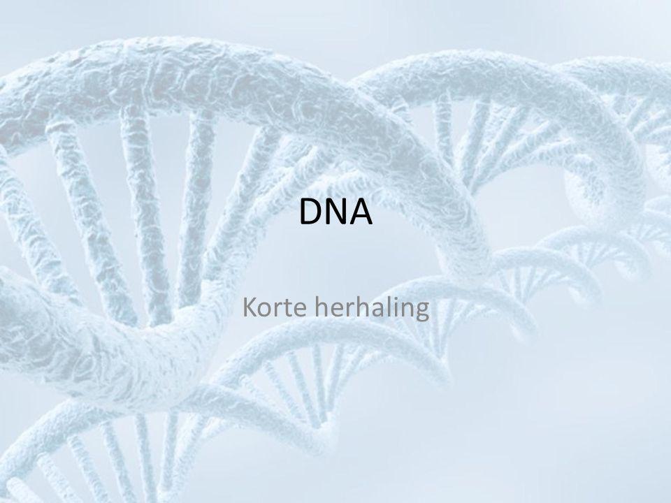Betekenis van DNA • Bevat code voor maken van eiwitten – Basenvolgorde in DNA (A, T, C, G) bepaalt aminozuurvolgorde in eiwit – Eiwit heeft in cel functie als: • Enzym (synthese van andere stoffen) • Structuurgever (cytoskelet, cytospieren) • Transporteur (bijv.