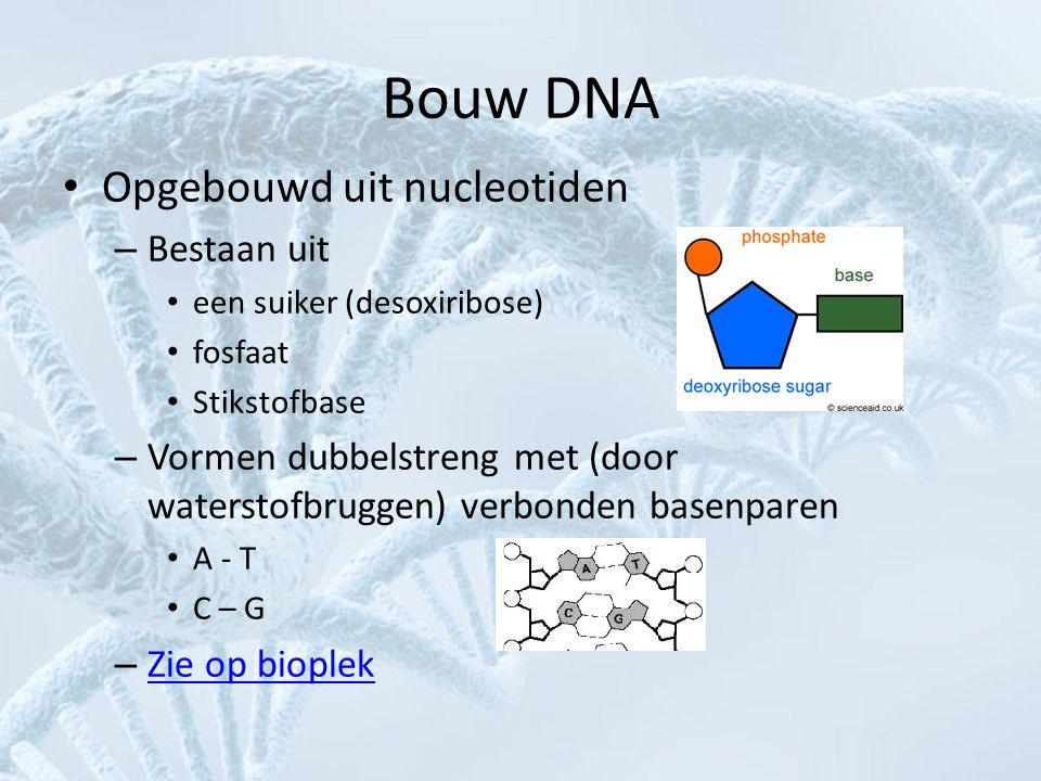 Bouw DNA • Opgebouwd uit nucleotiden – Bestaan uit • een suiker (desoxiribose) • fosfaat • Stikstofbase – Vormen dubbelstreng met (door waterstofbrugg