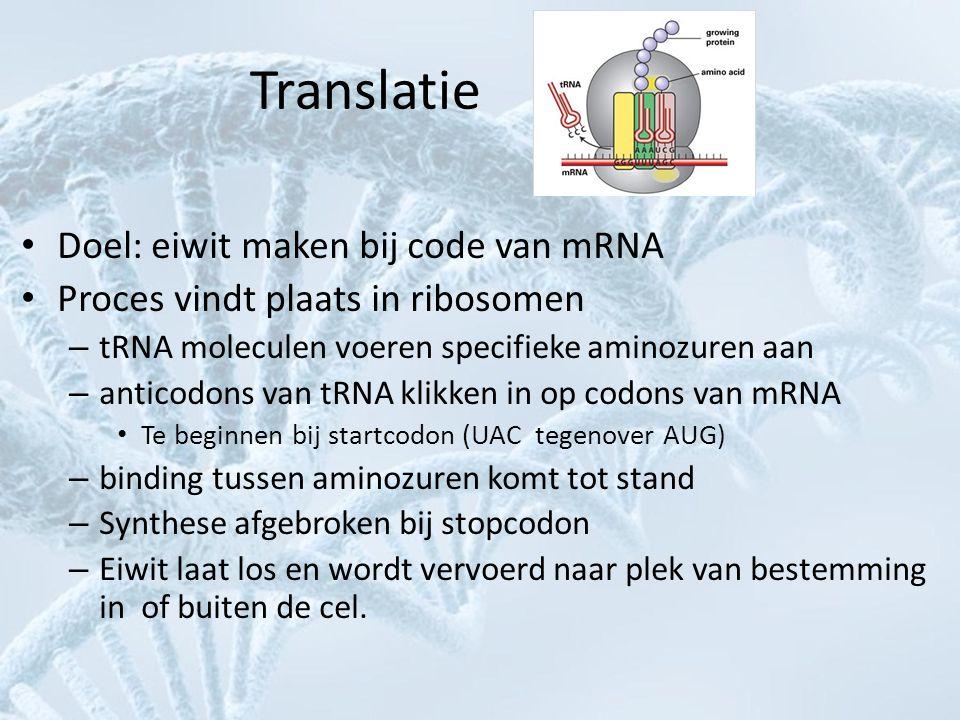 Translatie • Doel: eiwit maken bij code van mRNA • Proces vindt plaats in ribosomen – tRNA moleculen voeren specifieke aminozuren aan – anticodons van