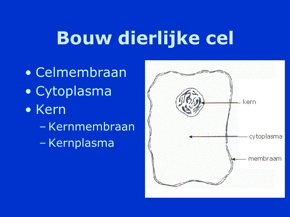 Grootte Grootte van cellen is variabel -Kleinste dierlijke cel ongeveer 4 µm -Grootste enige centimeters (een ei) -Het menselijk lichaam bevat triljoenen cellen.